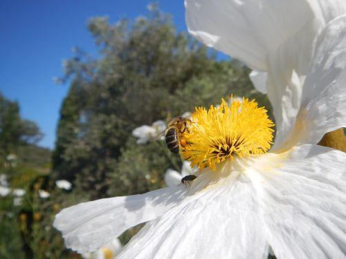 bee flower nectar
