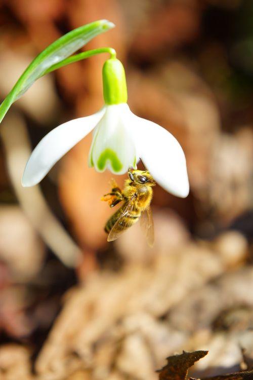 bee pollination honey