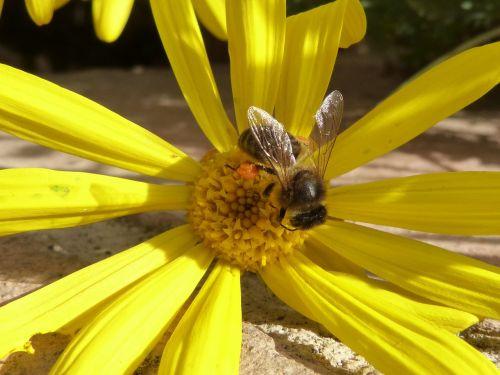 bee pollen libar