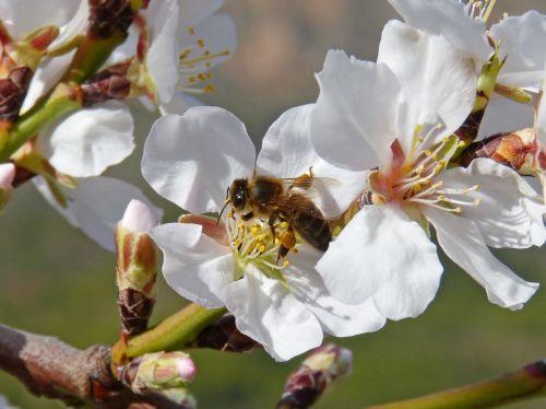 bee libar pollen