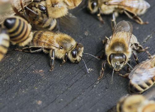 bee buzz honey