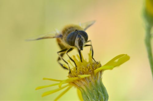 bee insect taking nectar