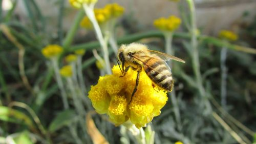 bee insect nature