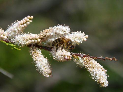 bee flower libar