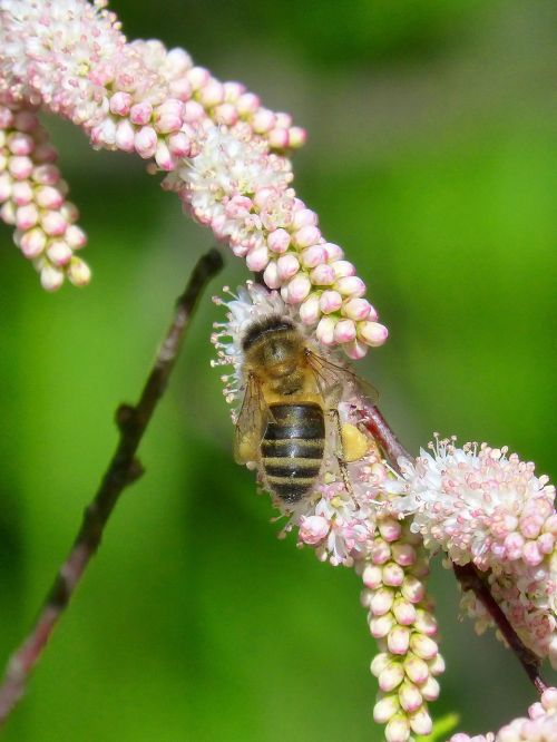 bee flowers libar