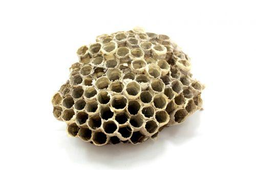 bee hive honey