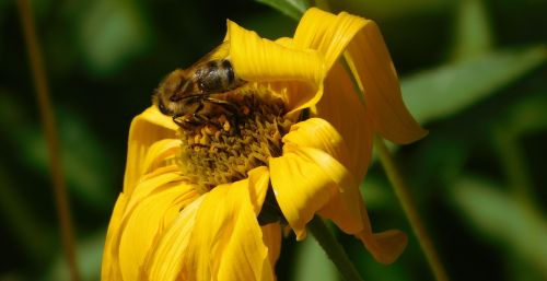 bee bee on flower hard working