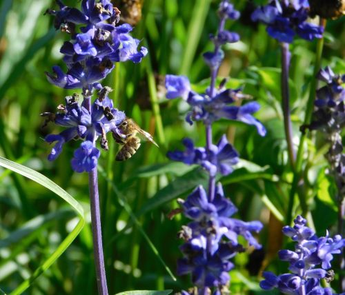 bee collect pollen collect nectar