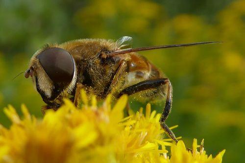 bee bug bees