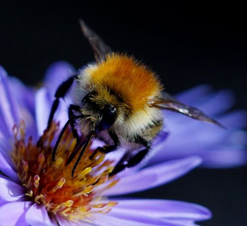 bee bug nature