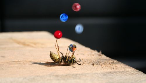 bee wasp superstar