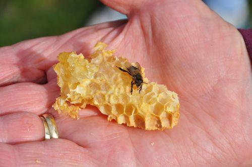 bee honey combs