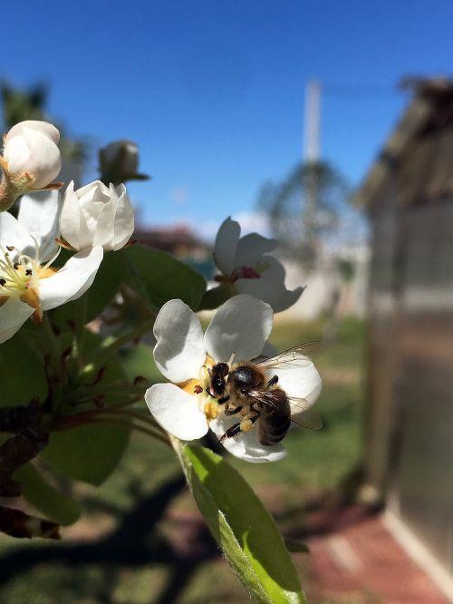 bee flower spring