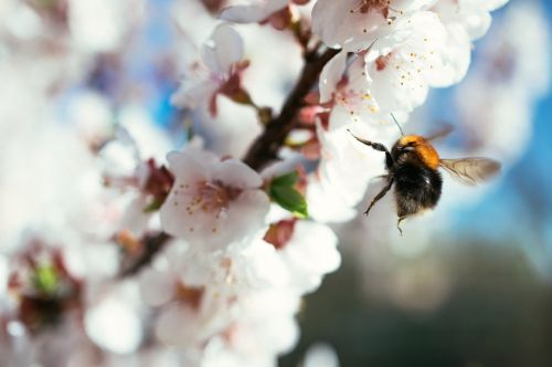 bee flower hard worker