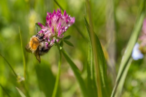 bee nectar flowers