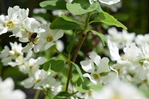 bee flower bud