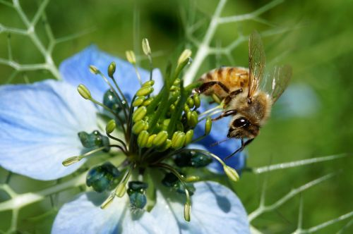 bee summer insect