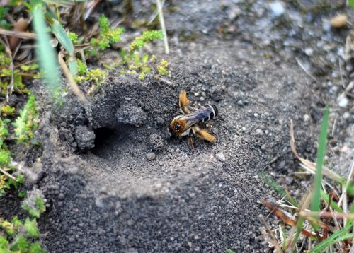 bee pants bee wild bee