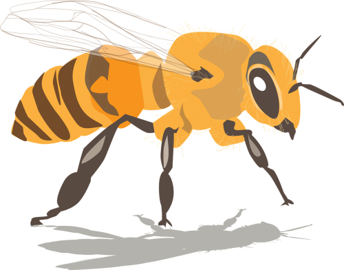bee insect honey