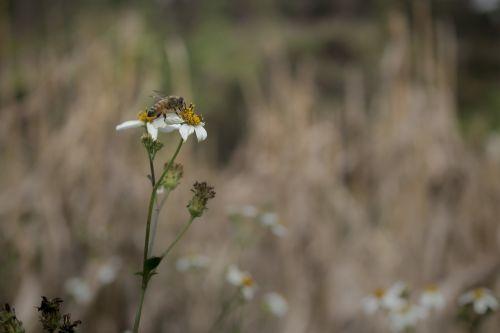 bee flower autumn