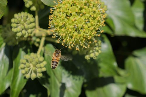 bee nature pollination