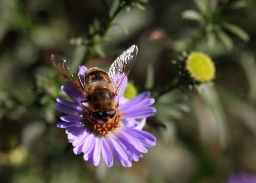 bee flower mov