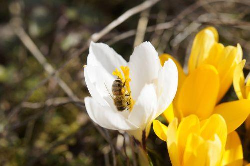 bee collect pollen close