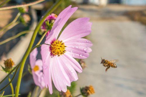 bee flora flower