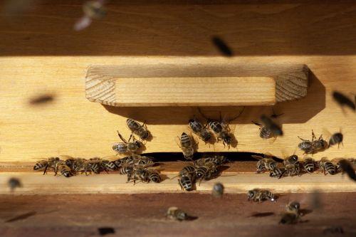 bee beehive honey bees