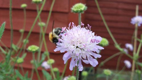 bičių,sodas,augalas,vabzdys,žiedadulkės,apdulkinimas,nektaras,sezonas,apdulkinimas,gamta,pavasaris,apis,laukiniai,gėlių