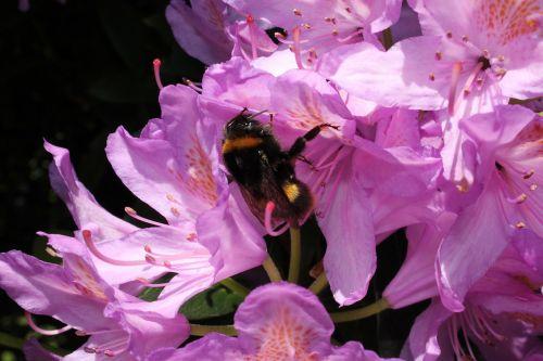 bee nature garden