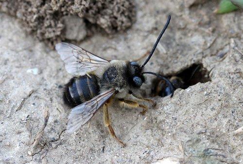 bee  wild  anthill