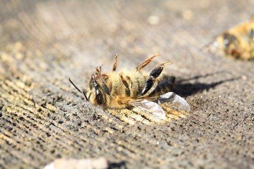 bee  dead  pesticide