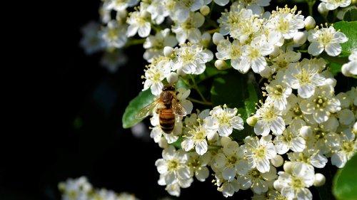 bee  nice  bees