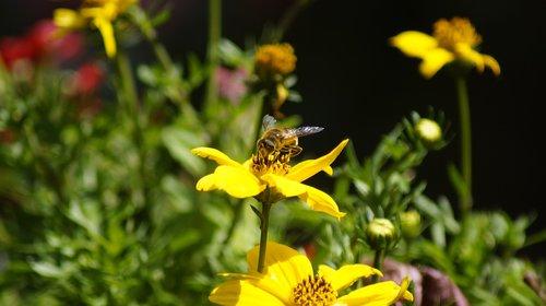 bee  close up  nature