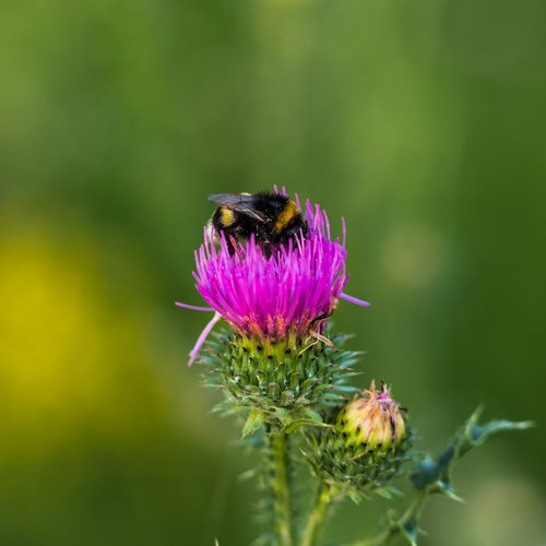 bee  glean  insect