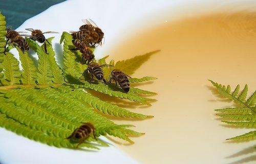 bee  honey  feeding