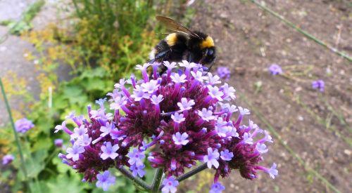 bee flower pollen