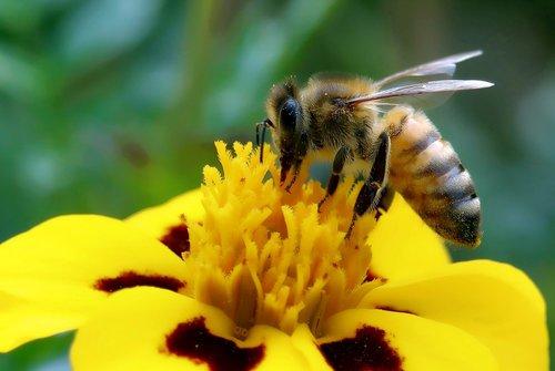 bee  always  close up