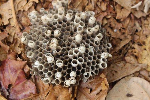 bee  beehive  hive