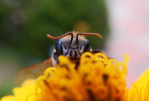 bee  apiary  hive