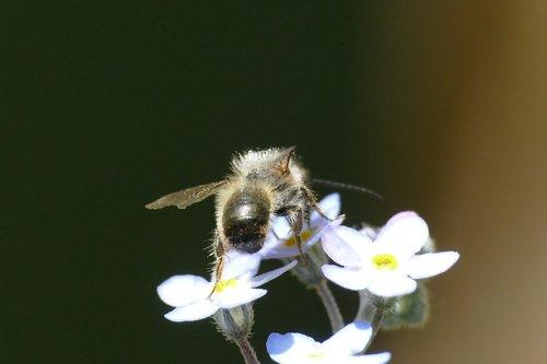 bee  macro  insect