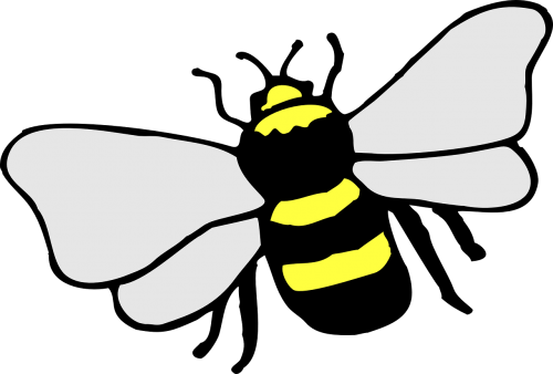 bee insect stripes