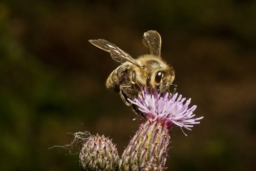bee honey honey bee