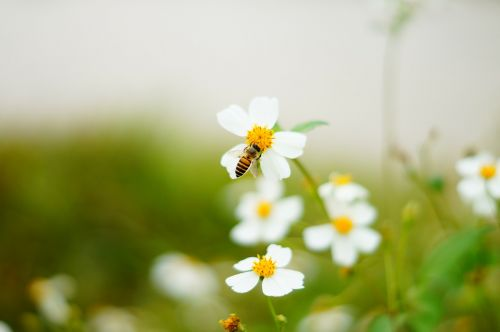 bee flowers and plants ecology