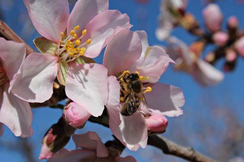bee field honey