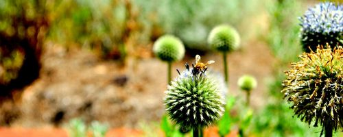 bee flower nature