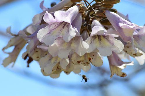 bee nature honey