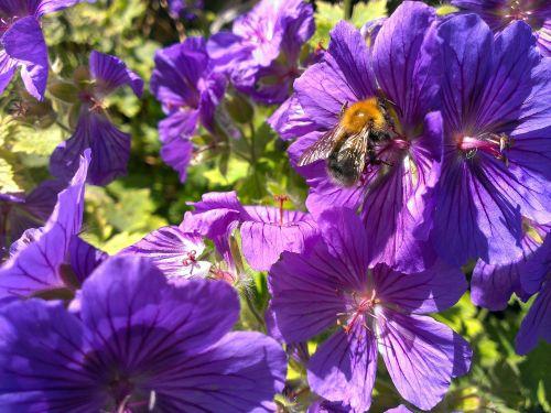 bee flowers nectar
