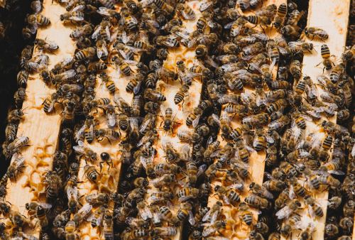 bee hive insect